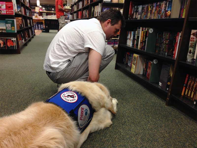 Service dog resting quietly as his owner selects a book