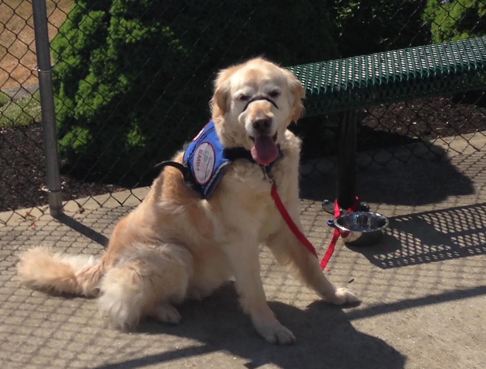 Learn the story of New Hampshire Coalition for the Support of Service Dogs