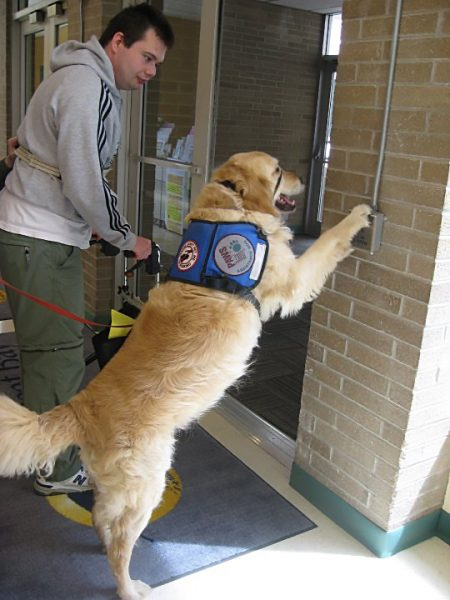 Service dog pressing the handicap door open button while his owner stands with a walker